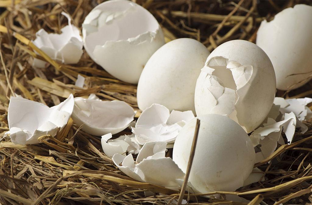 Яичная скорлупа на сене