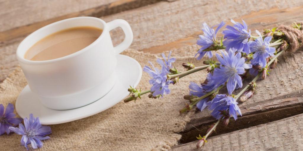 Цикорий растение и напиток на столе