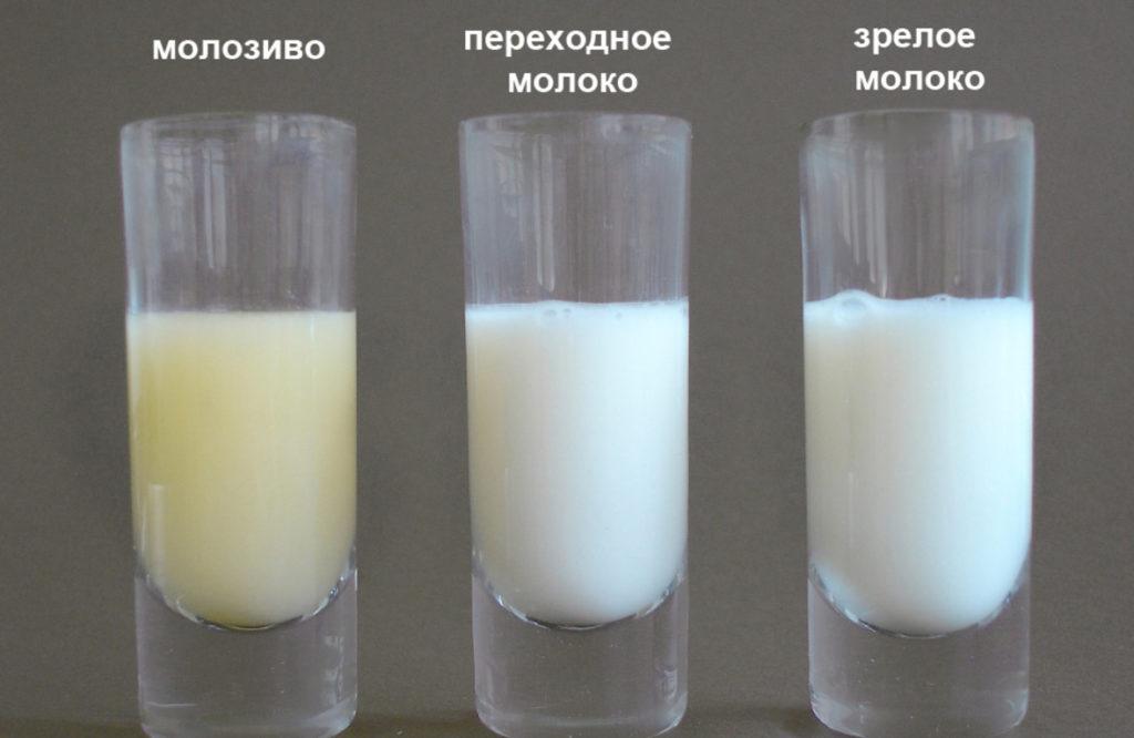 Молозиво, переходное молоко и молоко в стаканчиках на столе
