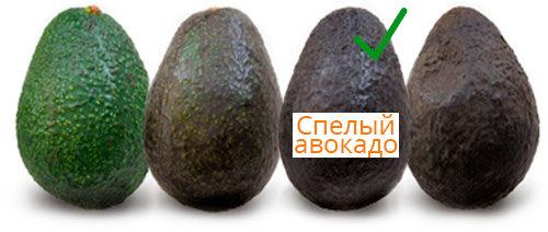 Степень зрелости авокадо на белом фоне