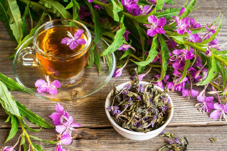 Можно ли пить иван-чай при гв
